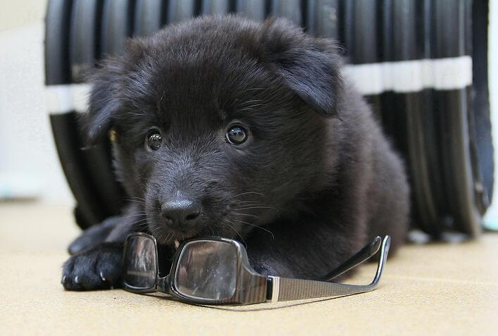 Culturally not appropriate image puppy chewing on glasses